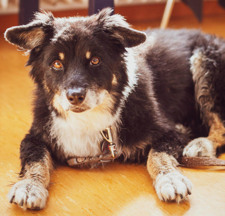 Hund Snoopy bei Tierärztin Patricia Mayerhauser