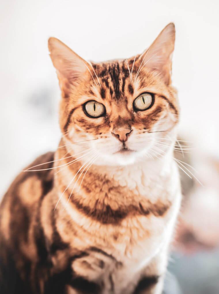 Katze Mimi bei Tierärztin Patricia Mayerhauser